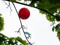 Wetterballonprojekt_410